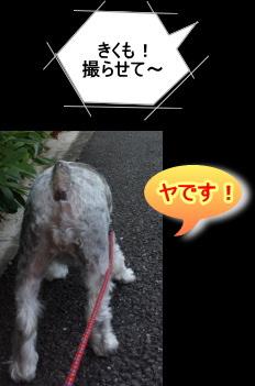 20141009kiku06.jpg