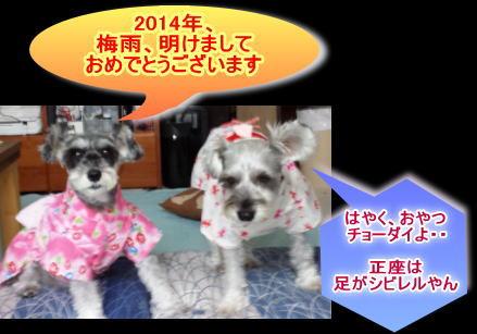 20140781kikumimi2.jpg
