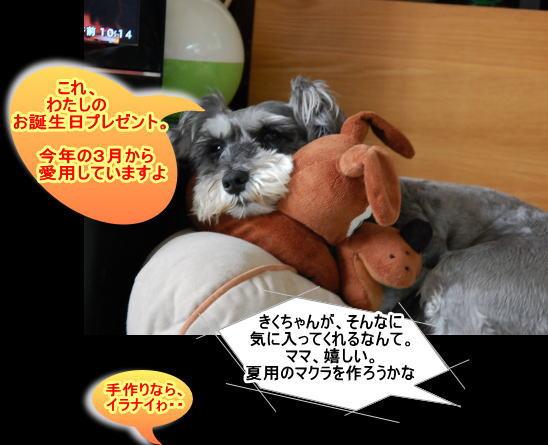 20140710kiku2.jpg
