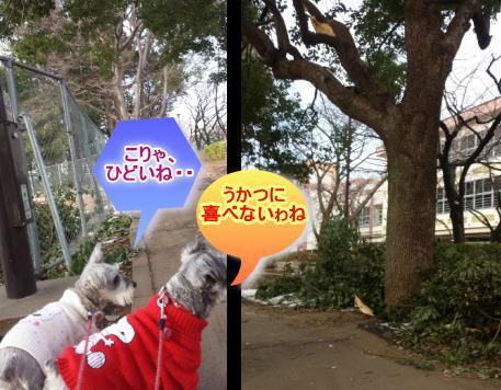 kikumimi20140219c.jpg