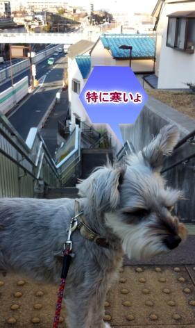 20140205mimi.jpg