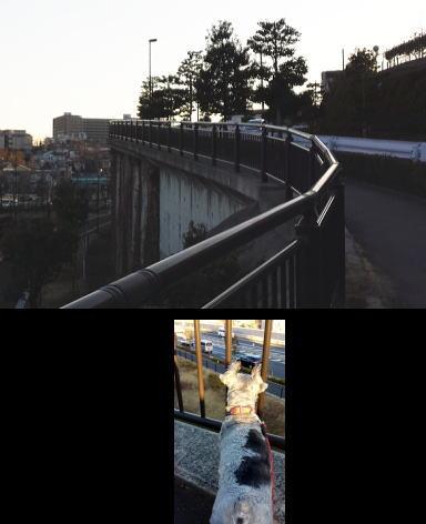 20140205kiku2.jpg