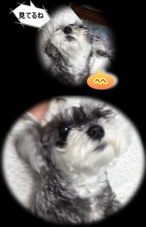 20150417kiku02.jpg