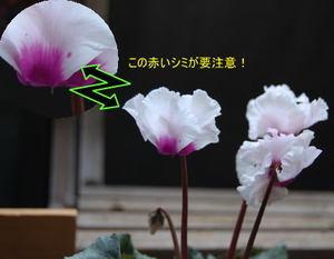 Image201011a