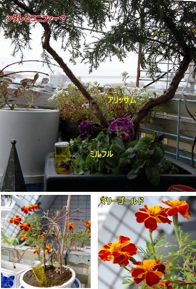image3b.jpg