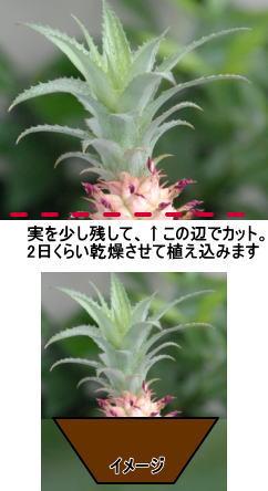 201309004d.jpg