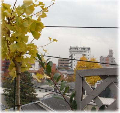20121127ichou.jpg