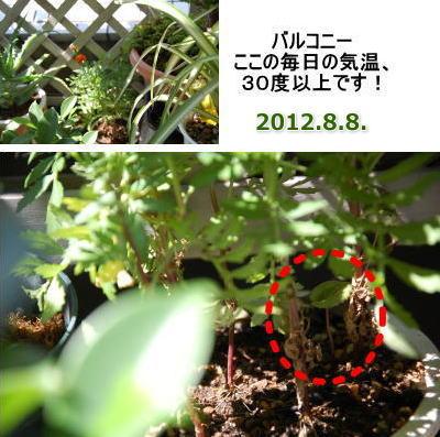 20140226fushigi03.jpg