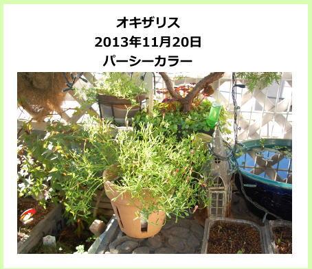 oxalis_aki02.jpg