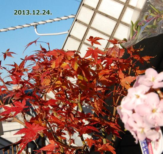 20131224momiji.jpg