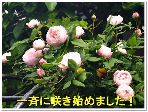 20170507_020.jpg