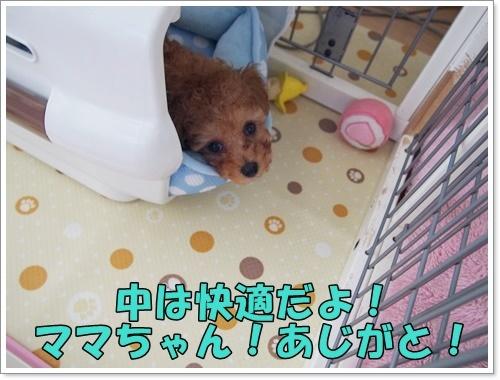 20170618_018.jpg