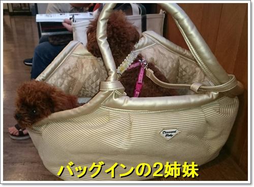 20170730おとめゆめ1