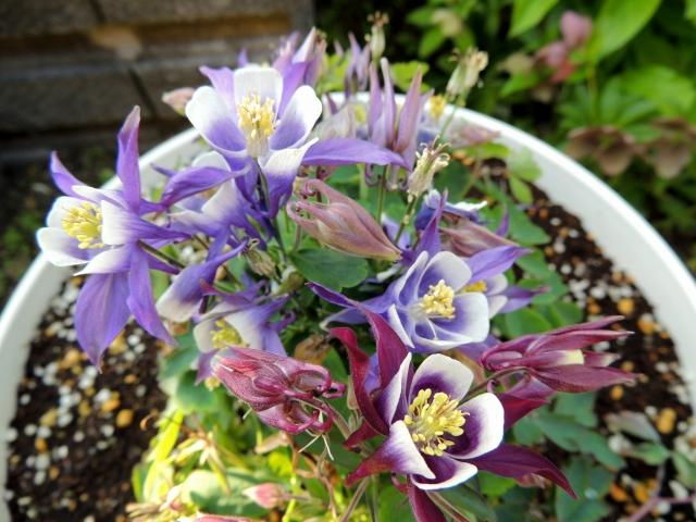 N9251花たち