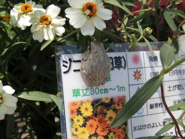 N9425花とカエル