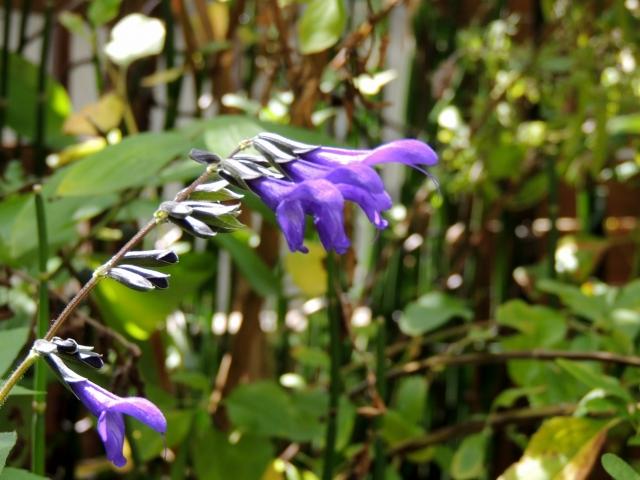 N9504庭に咲く