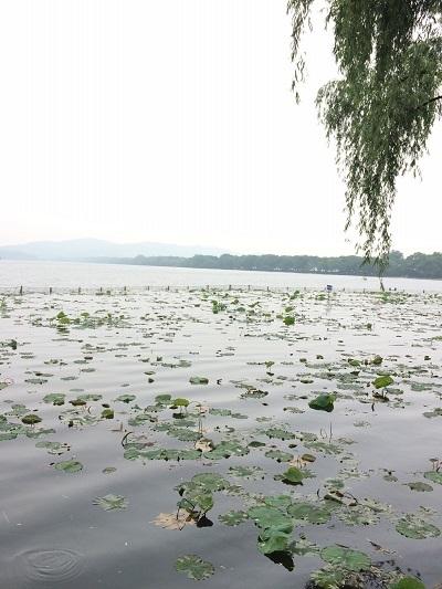 17期茶芸師ツアー西湖