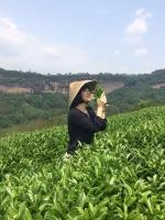 中国茶文化について