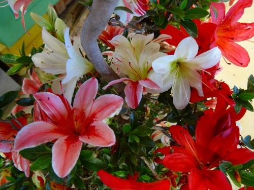 花綴DSC04027