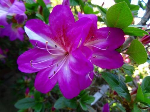 春苑DSC04014