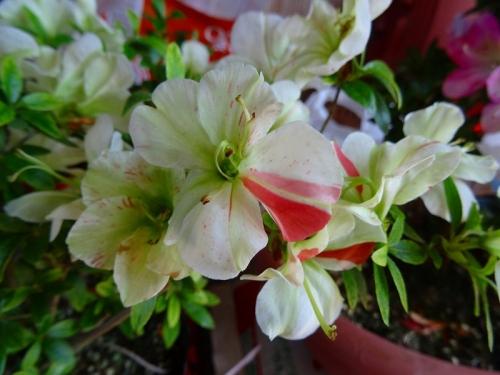 緑花の泉DSC04237