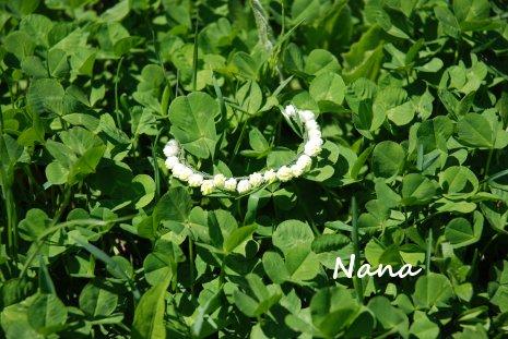 clover1-1.jpg