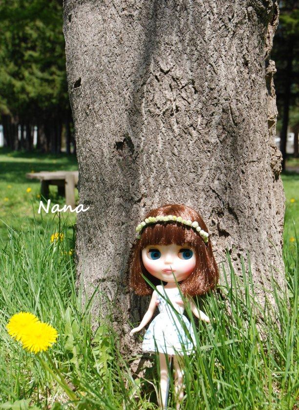clover1-10.jpg