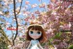clover1-14.jpg