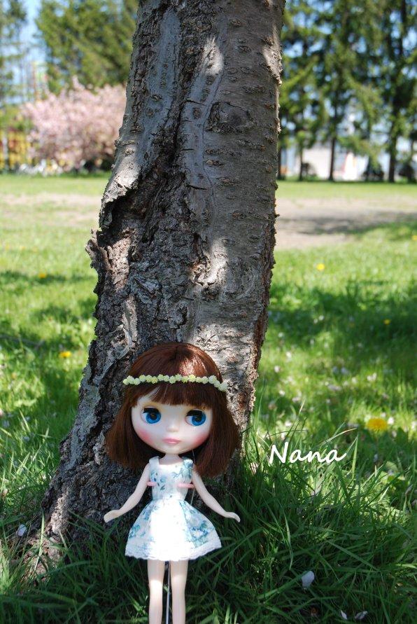 clover1-17.jpg