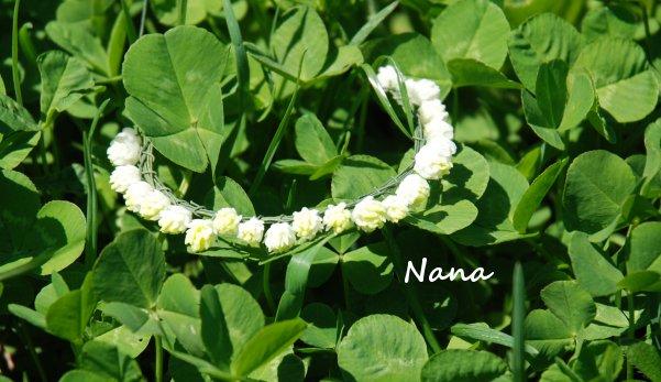 clover1-2.jpg