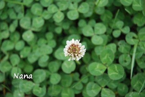clover1-24.jpg