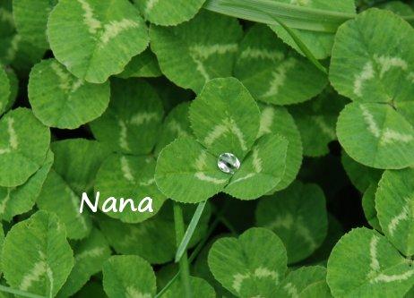 clover1-25.jpg
