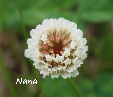 clover1-26.jpg