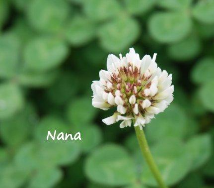 clover1-27.jpg