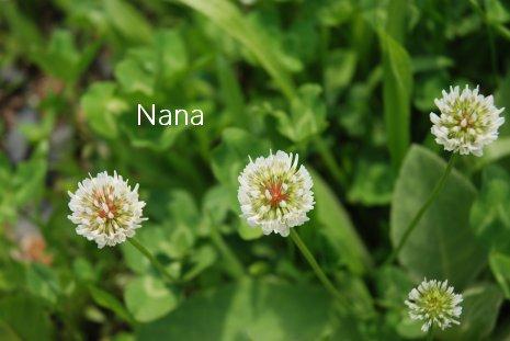 clover1-30.jpg