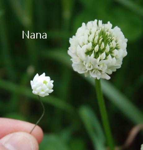 clover1-32.jpg