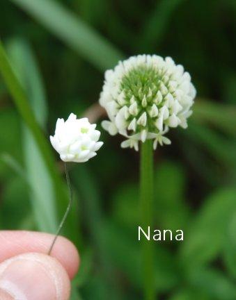clover1-33.jpg