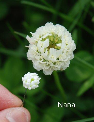 clover1-34.jpg