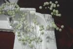 clover1-35.jpg