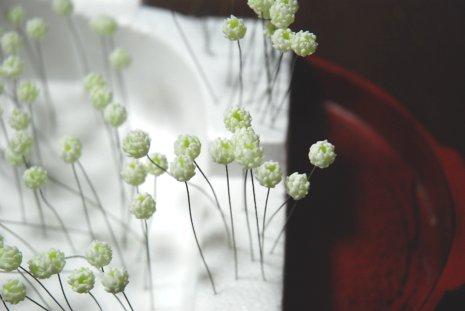 clover1-36.jpg