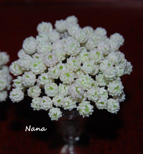 clover1-37.jpg