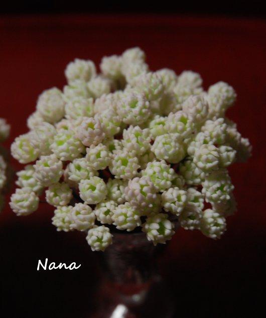 clover1-38.jpg