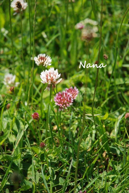 clover1-48.jpg
