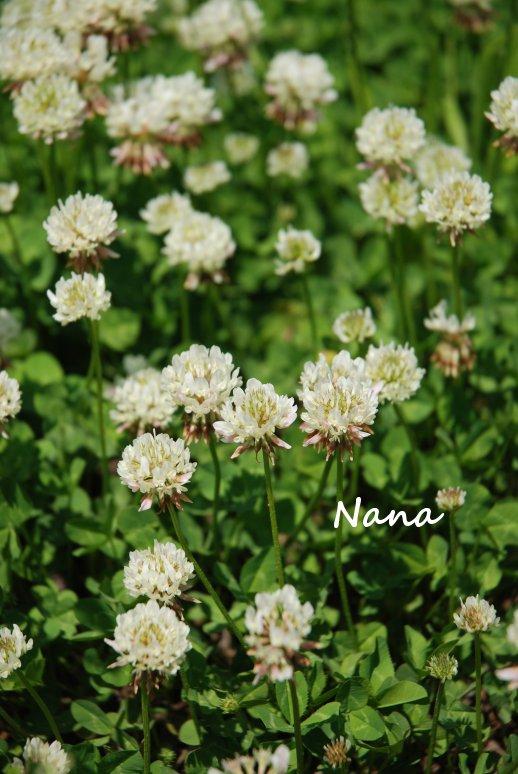 clover1-51.jpg