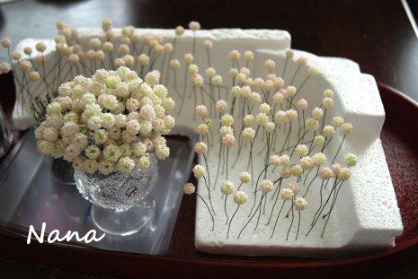 clover1-53.jpg