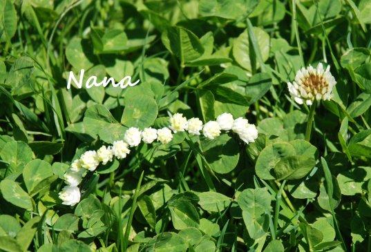 clover1-8.jpg