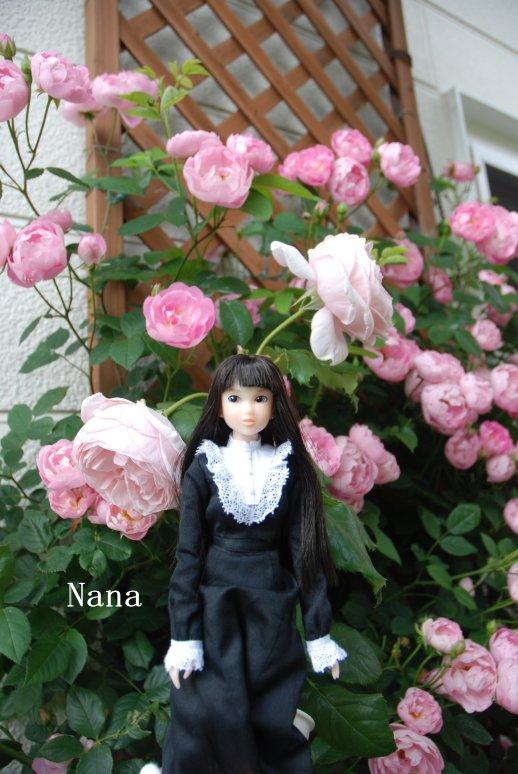 rosegarden1-19.jpg
