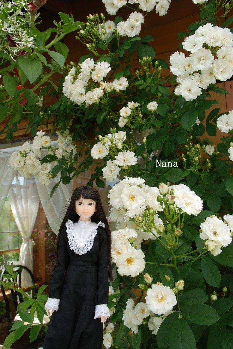 rosegarden1-27.jpg