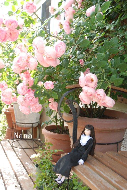 rosegarden1-29.jpg
