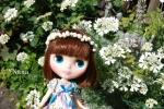 rosegarden1-2.jpg